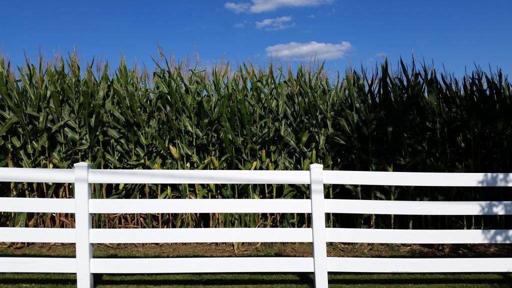 sky corn fence